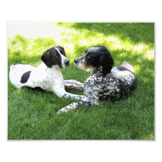 Pointer and Setter Love Photo Print