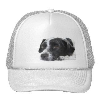 Pointer Baseball Hat