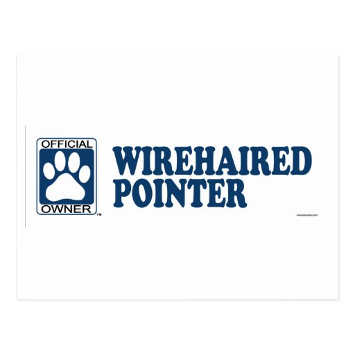 POINTER_blue WIREHAIRED Tarjetas Postales
