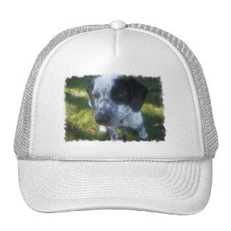 Pointer Dog Baseball Hat