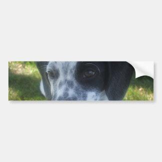 Pointer Dog Bumper Sticker
