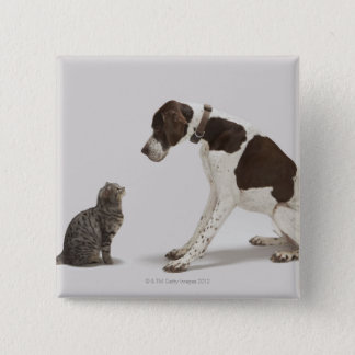 Pointer looking down at cat button
