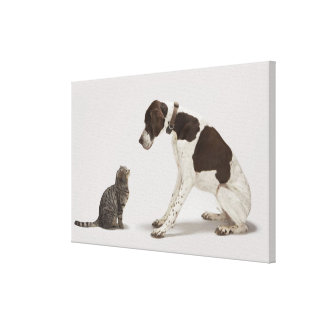 Pointer looking down at cat canvas print