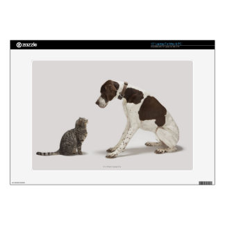 Pointer looking down at cat decal for laptop