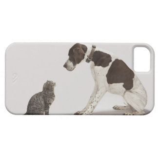 Pointer looking down at cat iPhone 5 cover