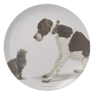 Pointer looking down at cat melamine plate