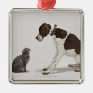Pointer looking down at cat metal ornament
