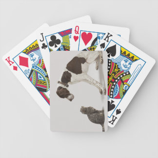 Pointer looking down at cat playing cards