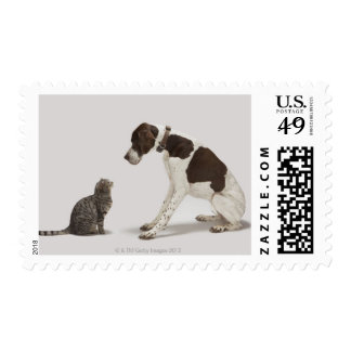 Pointer looking down at cat postage stamps