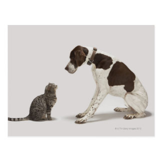 Pointer looking down at cat postcard