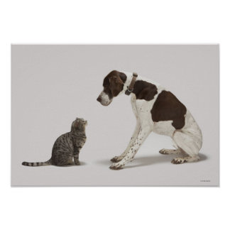 Pointer looking down at cat poster