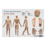 Points and meridians of the body posters