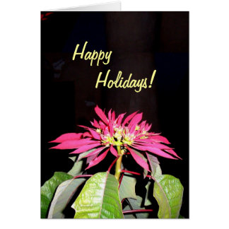 Pointsettia 2 greeting card
