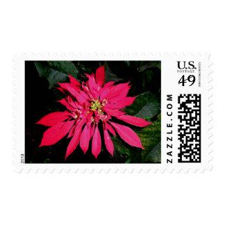 Pointsettia 3 stamps