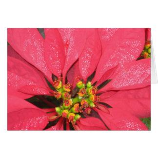 Pointsettia Holiday Card