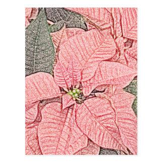 Pointsettia  Sketch Postcard