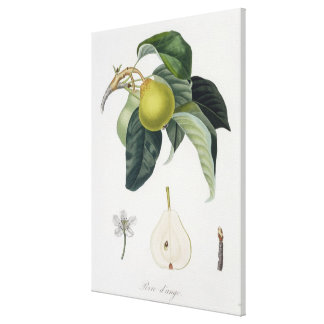 Poire d'ange, engraved by Bocourt, published 1755 Canvas Print
