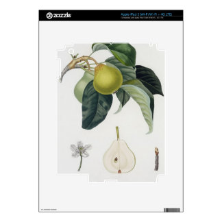 Poire d'ange, engraved by Bocourt, published 1755 iPad 3 Skin