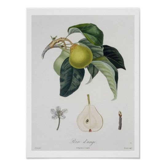 Poire d'ange, engraved by Bocourt, published 1755 Poster