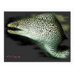 Poised and Ready-Guinie Fowl Eel Postcard
