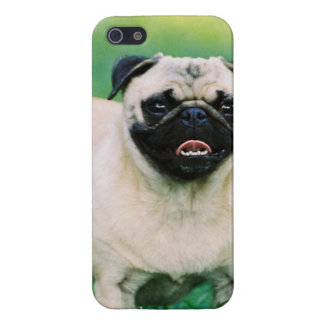 Poised Pug Cover For iPhone SE/5/5s