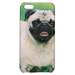 Poised Pug iPhone 5C Cover