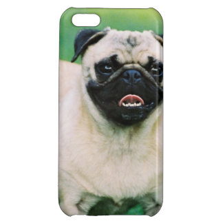 Poised Pug iPhone 5C Covers