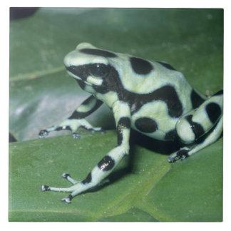 Poison Dart Frog, (Dendrobates auratus) Cahuita Ceramic Tile