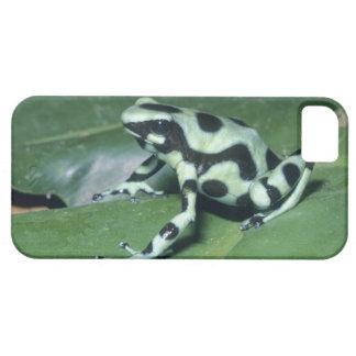 Poison Dart Frog, (Dendrobates auratus) Cahuita iPhone SE/5/5s Case
