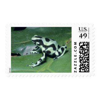 Poison Dart Frog, (Dendrobates auratus) Cahuita Postage