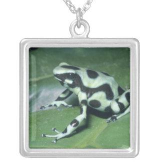Poison Dart Frog, (Dendrobates auratus) Cahuita Silver Plated Necklace