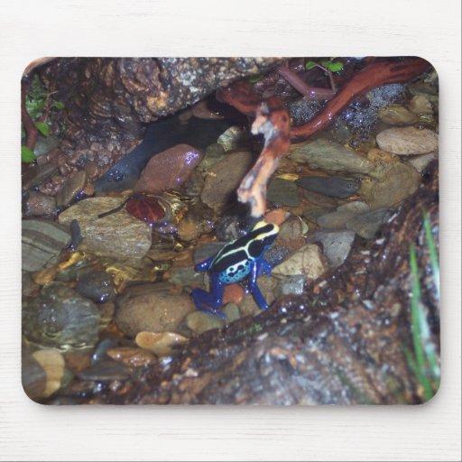Poison dart frog mousepad