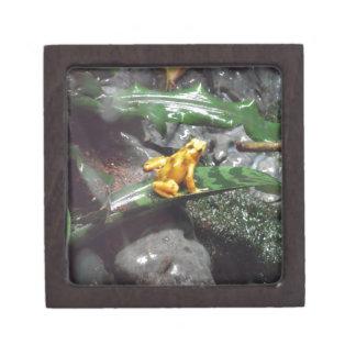 Poison Dart Frog Photo Premium Trinket Boxes