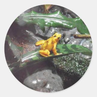 Poison Dart Frog Photo Round Stickers