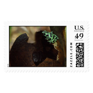 Poison Dart Frog Postage Stamps