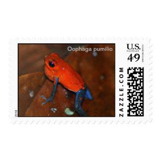 Poison dart frog postage-Oophaga pumilio
