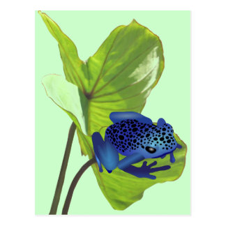Poison Dart Frog Postcard
