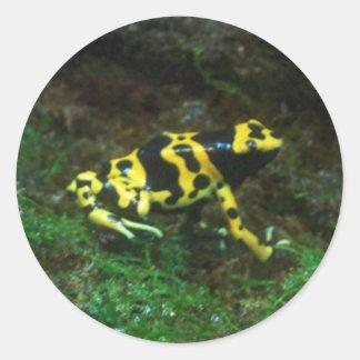 Poison Dart Frog Round Stickers