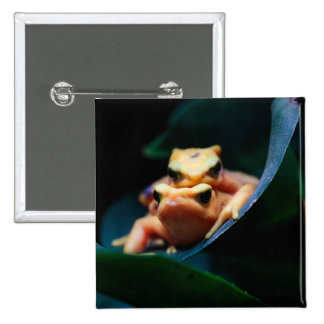Poison Dart Frogs Pins