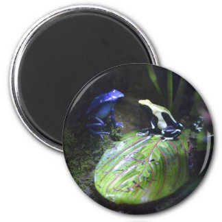 Poison Dart Frogs Magnet