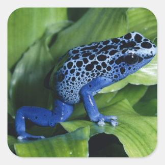 poison dart frogs square sticker