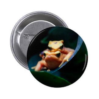 Poison Dart Frogs Wildlife Animal Photo Pin