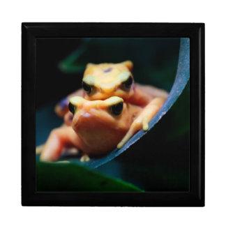 Poison Dart Frogs Wildlife Animal Photo Keepsake Box