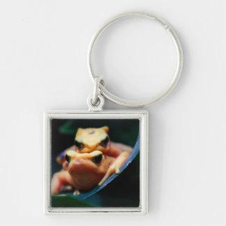 Poison Dart Frogs Wildlife Animal Photo Key Chains
