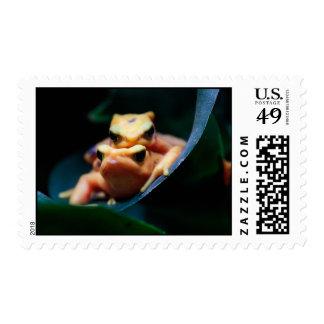 Poison Dart Frogs Wildlife Animal Photo Postage Stamp