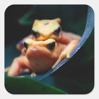 Poison Dart Frogs Wildlife Animal Photo Sticker