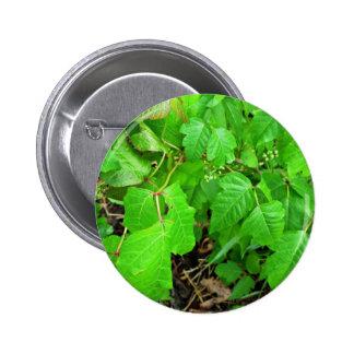 Poison ivy pinback button