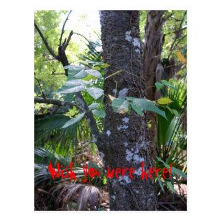 Poison Ivy Postcard