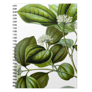 Poison nut tree vintage illustration book