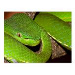 Venomous Green Serpent Postcard